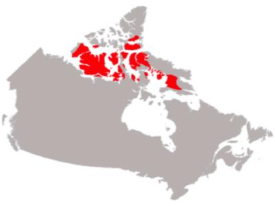 Social Studies Regions Of Canada Arctic Region